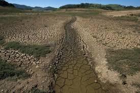 La Tierra se encontraría al borde de la sexta extinción