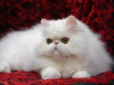 Foto Kucing Lucu Imut dan Menggemaskan 20