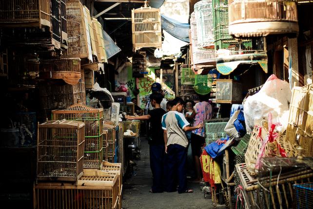 Daftar Harga Burung Di Wilayah Jakarta Pasar Kebayoran Lama Pasar