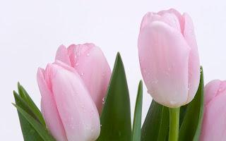 flores preciosas ara malikian - Fotos De Flores Preciosas