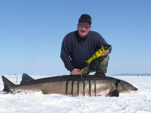 Wisconsin fishing reports sturgeon spearing 2013 for Lake link wi fishing reports