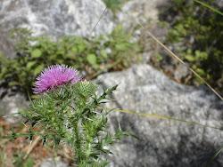 Flora regional