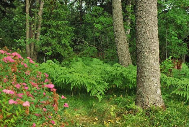 Muonamiehen mökki - Metsäpuutarha
