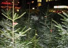 weihnachtsbäume hamburg