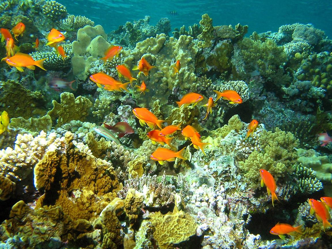 Free Cool Wallpapers Underwater Hd