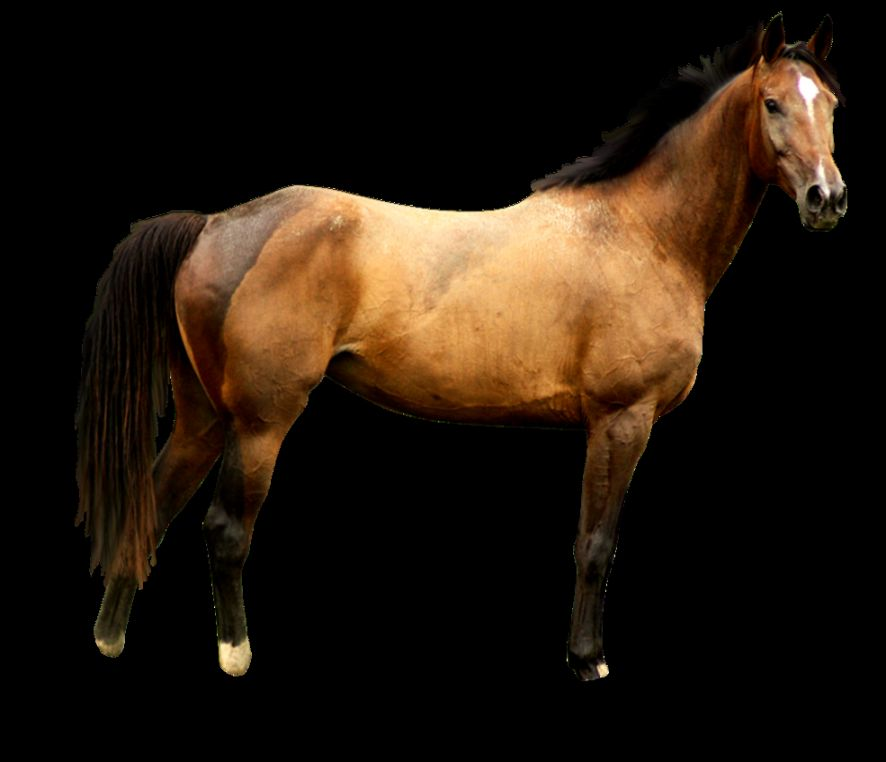 Horse png image free download picture