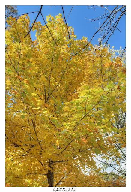 Falls Yellow