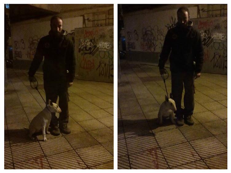 Juan y Tosco Bull Terrier 6 meses, activo y miedoso.