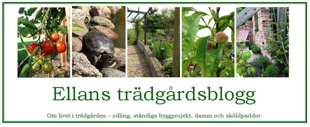 Ellans trädgårdsblogg