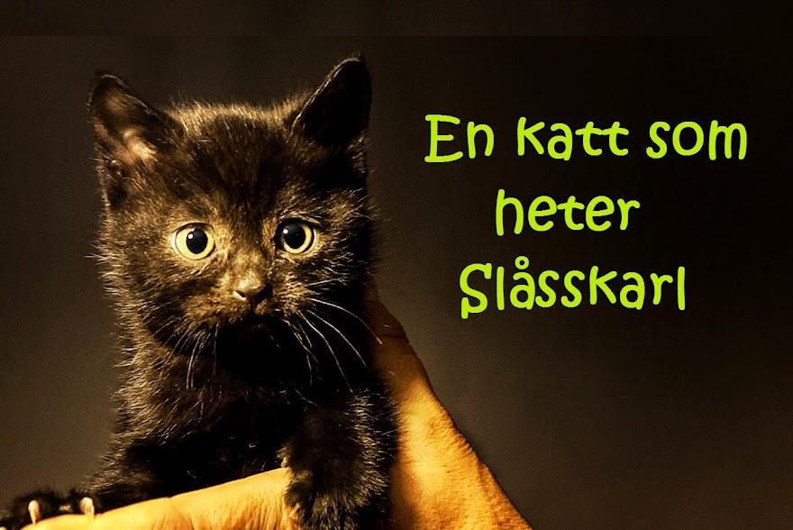 En katt som heter Slåsskarl