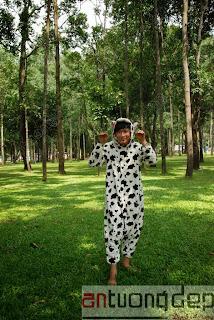 cho thuê thú hở mặt bò sữa