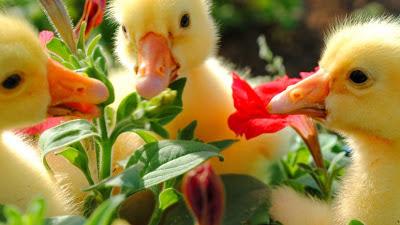 %D8%B7%D9%8A%D9%88%D8%B134 صور رمانسية طبيعية لأجمل الطيور 2014
