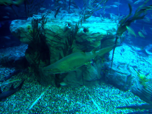 Sharks and sea life in Ocean Park, Hong Kong