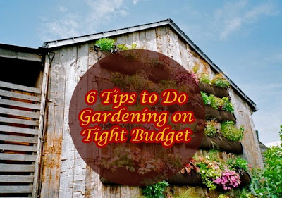6 Tips to Do Gardening on Tight Budget