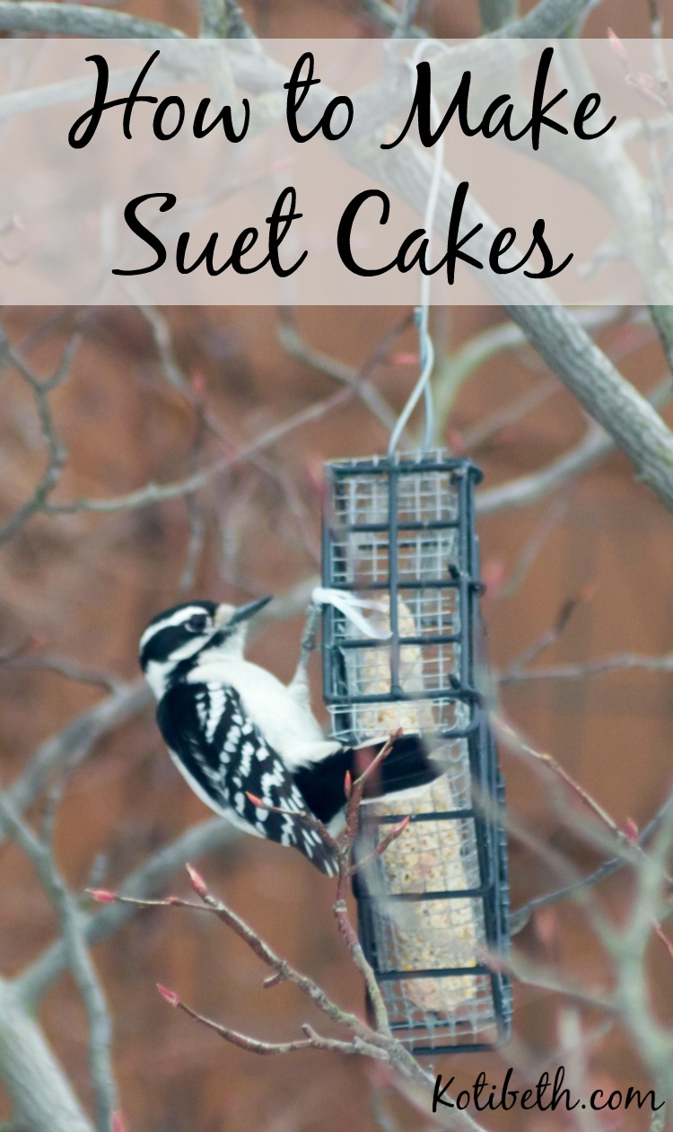 How To Make Easy Suet Cakes