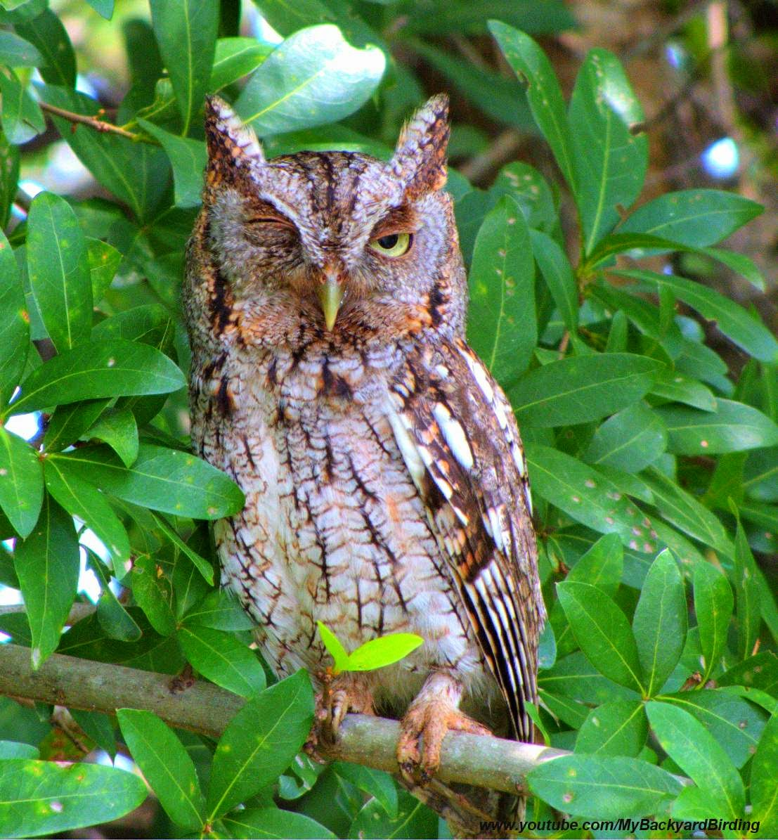 backyard birding and nature celebrate earth day simple