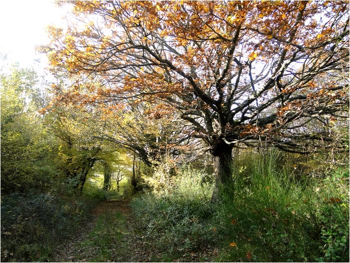couleur d'automne en forêt