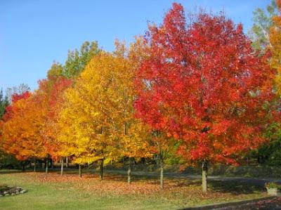 Κατάλληλα δέντρα για το έδαφός μας