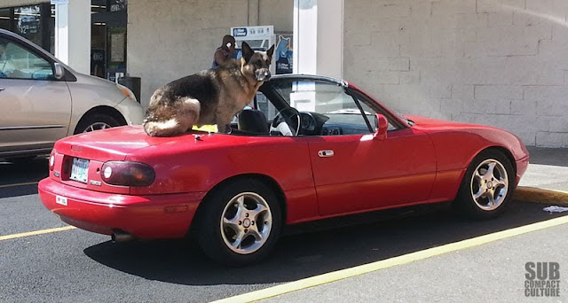German Shepard in a Miata