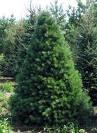 Plantas ornamentales plantas ornamentales importancia for Importancia de las plantas ornamentales