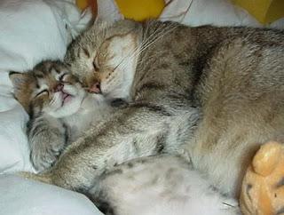 Posisi Lucu Kucing Lagi Tidur