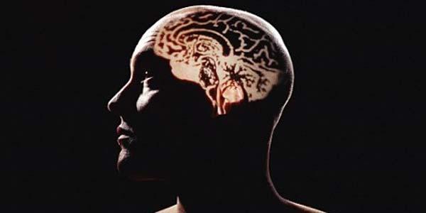 Apa Itu Otak Tengah dan Fungsinya?
