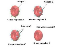 grupele de sange si alimentatia