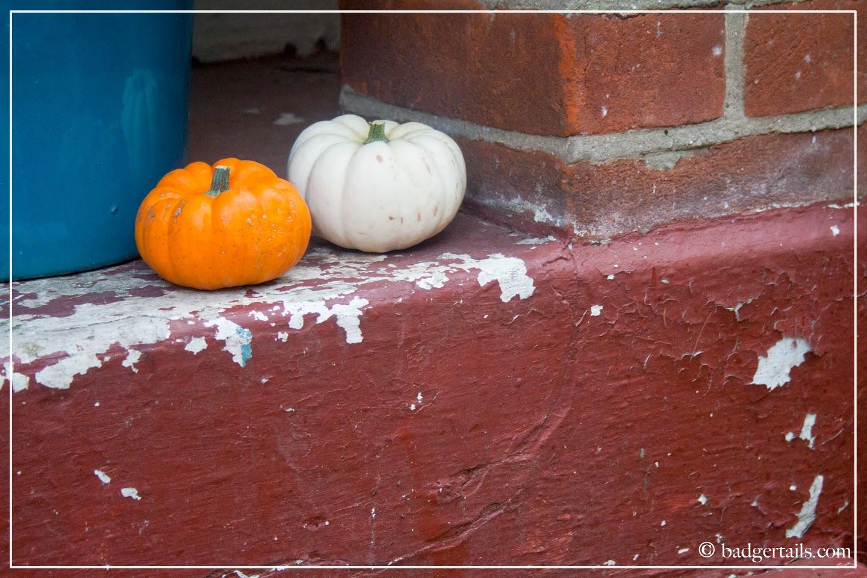 Munchkin Pumpkins on Doorstep