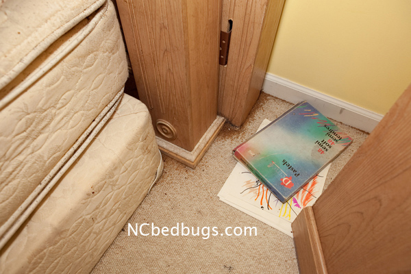 Dr Bed Bug Free Education Material On Bed Bugs Cimex
