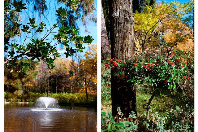 quinta de los molinos otoño madrid