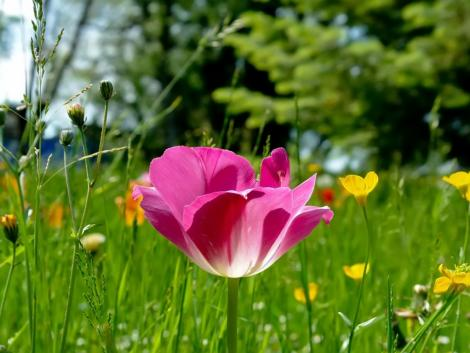 Fresh spring break flower picture christine odonnell fresh spring break flower picture mightylinksfo