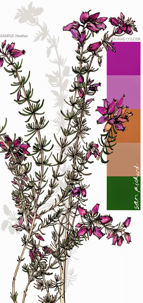 Planet Sam: Colour from the season - Bell Heather purple
