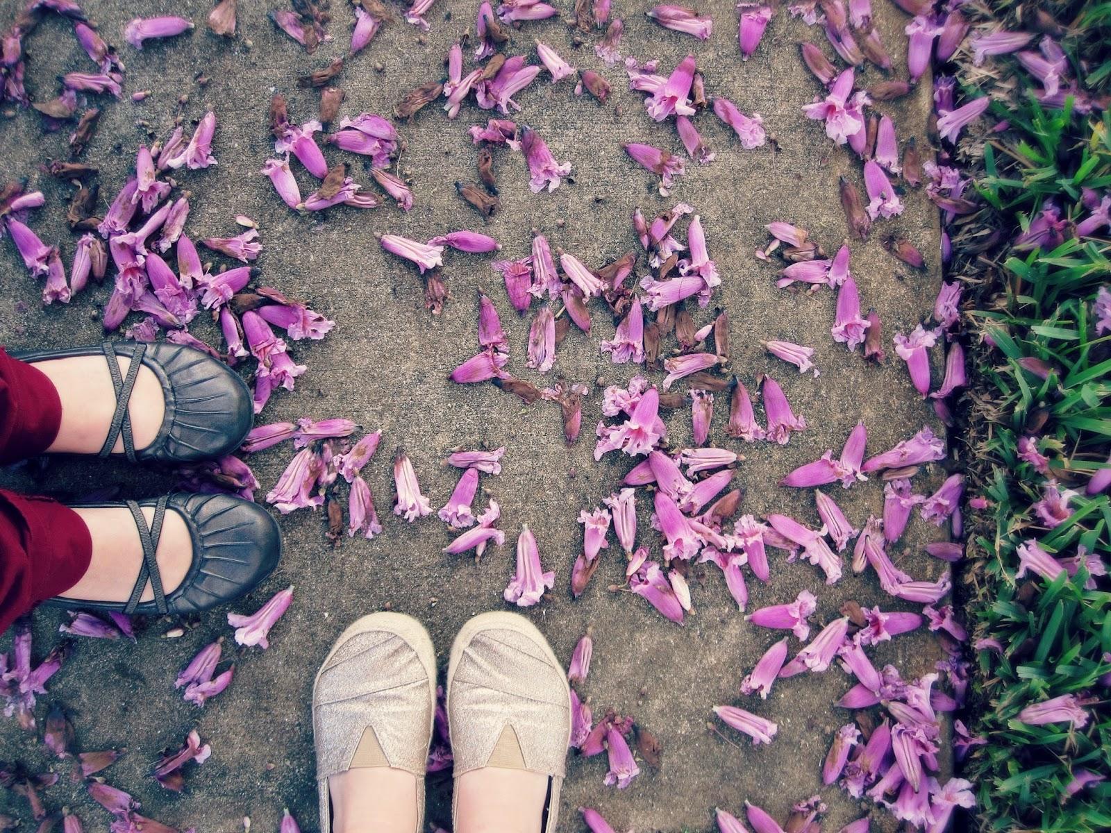 Spring Break In Florida, purple flowers, sorrow