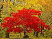 Fall! It's my absolute favorite season.