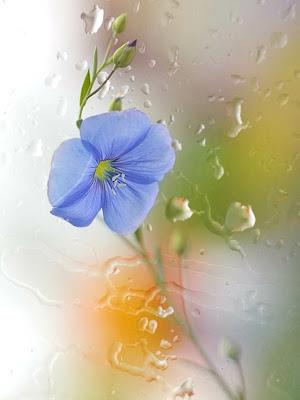 Ver Fotos De Las Flores Mas Hermosas Del Mundo - 60 fotografías de las flores más hermosas del mundo