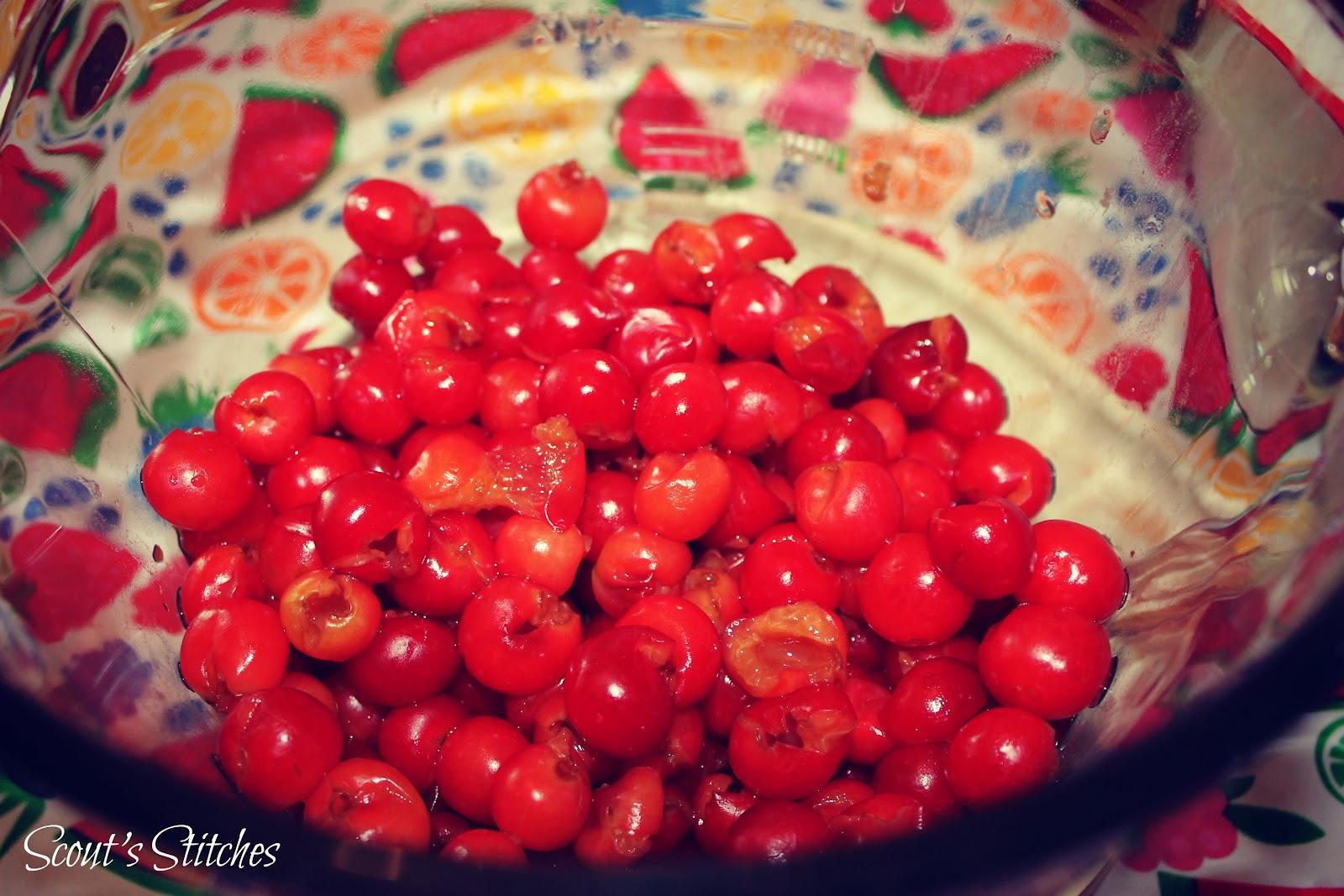 Sour Cherry Picking Long Island Ny