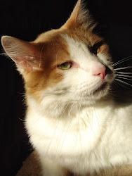 Sage Grass Cat