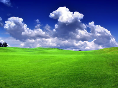 HD Grass Wallpapers