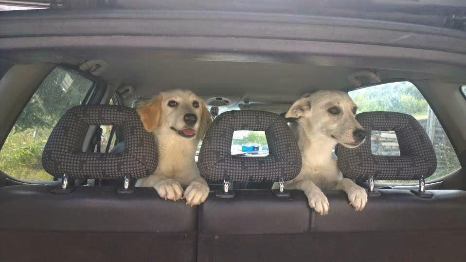 Mamma e figlia abbandonate schifosamente in mezzo ad una superstrada!