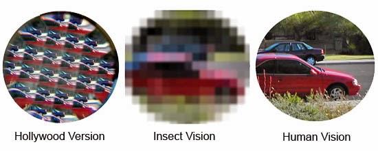 Penglihatan serangga