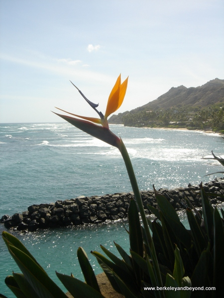 bird of paradise flower at Shangri La in Honolulu