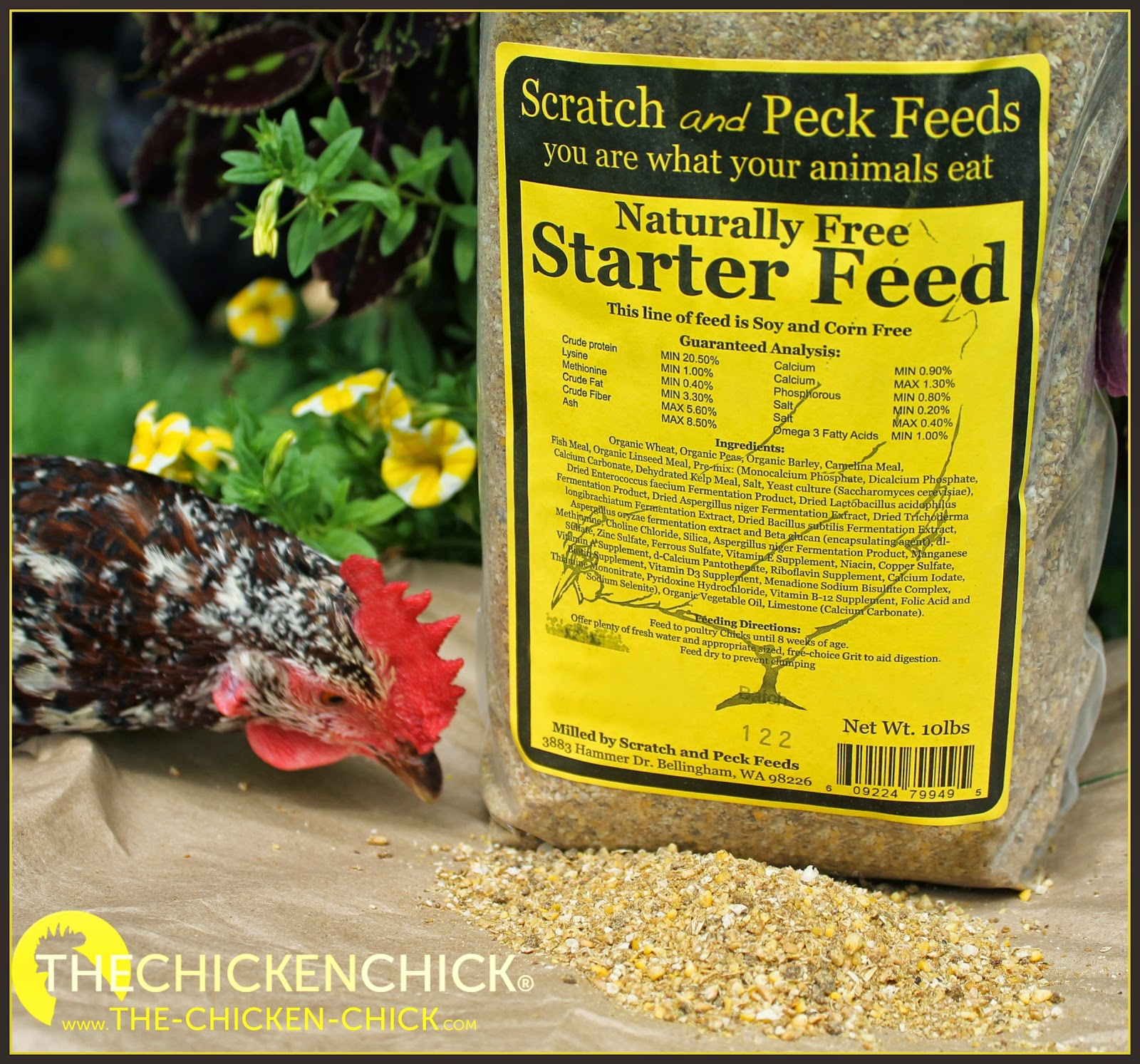 Scratch & Peck Feeds Giveaway at The Chicken Chick®