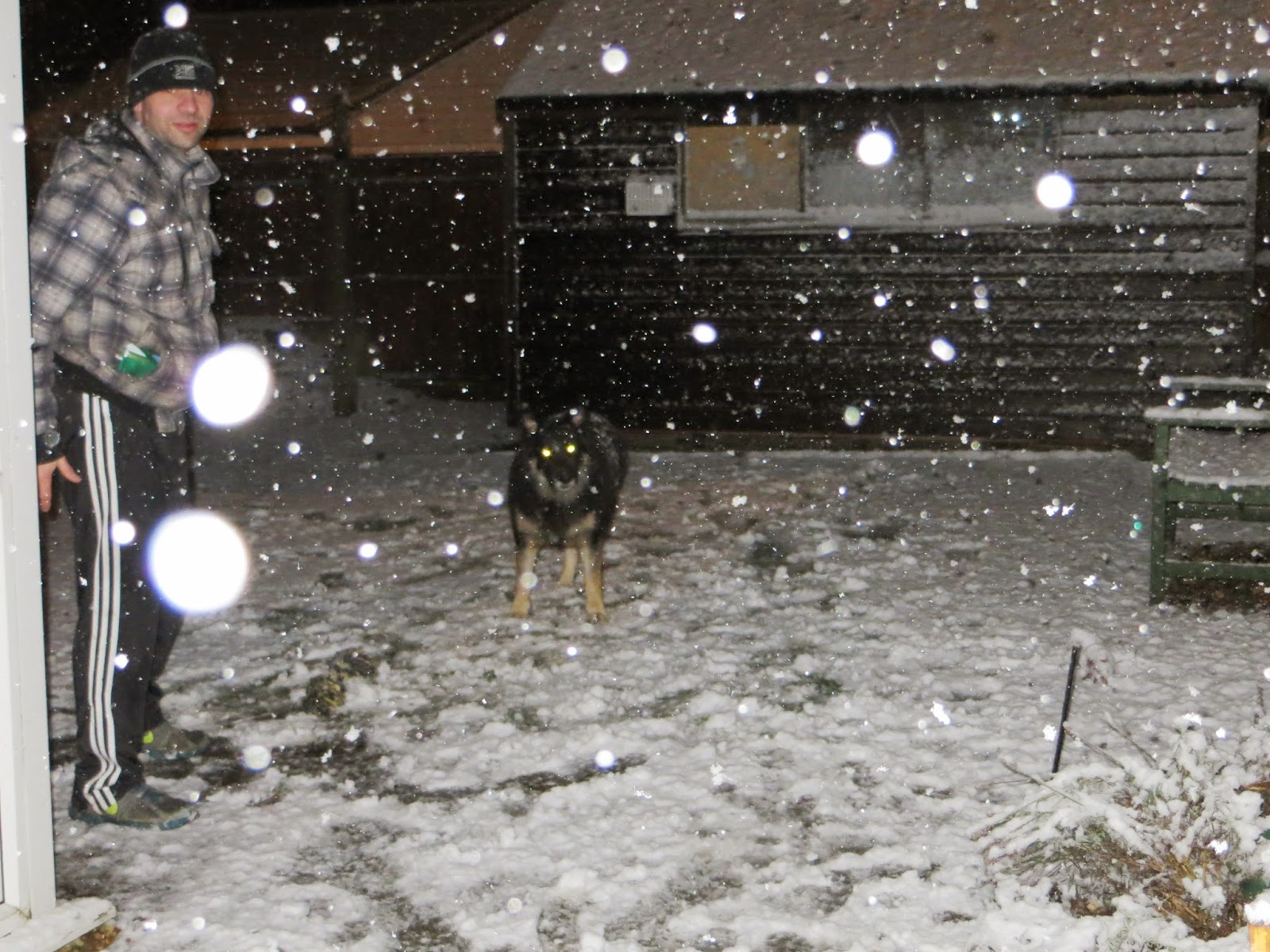 snow ball fights, snow dogs
