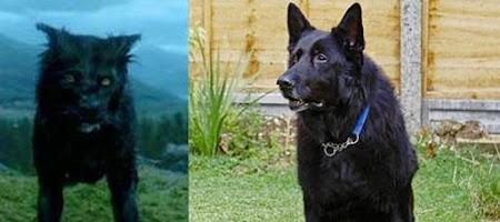 Cão que interpretou Sirius Black em 'Prisioneiro de Azkaban' procura um novo lar | Ordem da Fênix Brasileira