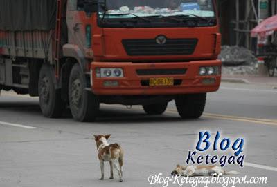 anjing dilanggar kenderaan