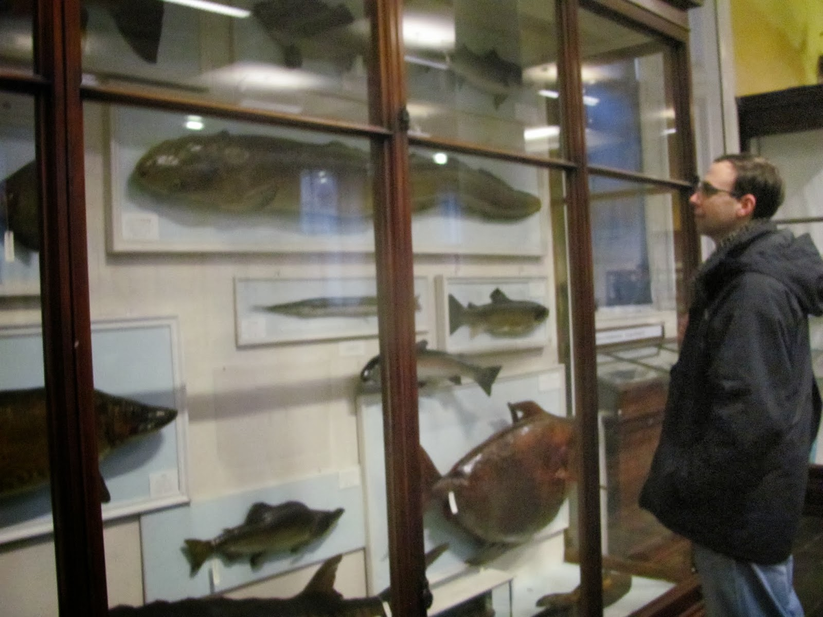 Cory Checkin' out the Fish at the Natural History Museum in Dublin, Ireland