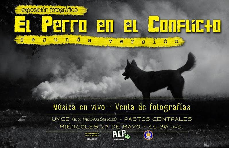 ÑUÑOA:  EXPOSICIÓN FOTOGRAFICA, EL PERRO EN EL CONFLICTO