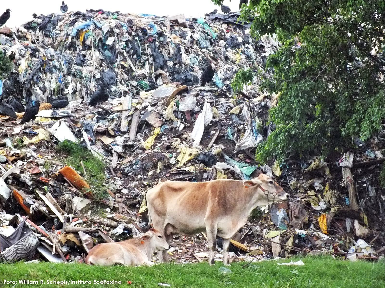 Pessoas e animais convivem com o lixo no Parque Ambiental Sambaiatuba