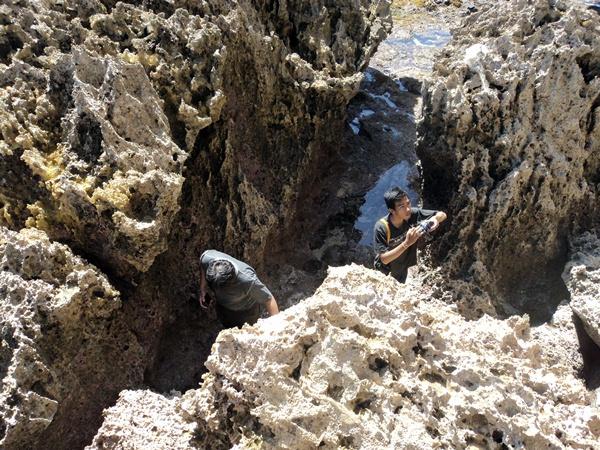 Karang Pantai Dadapan
