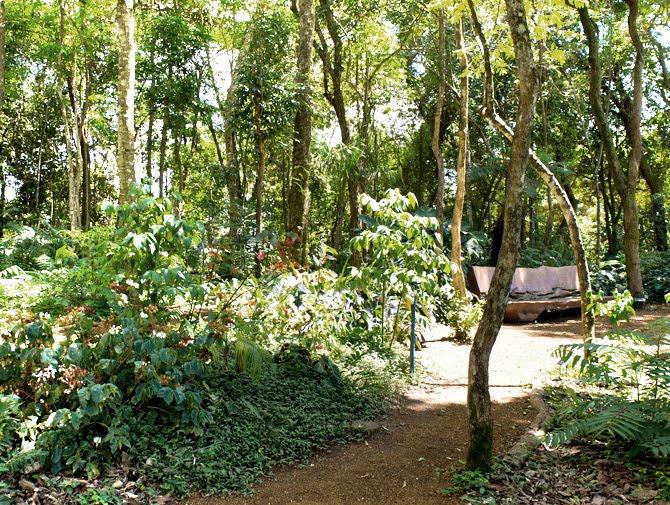 Bosque da Jussara no Viveiro Inhotim